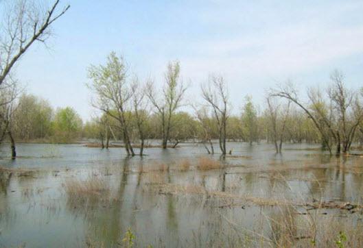 паводок на Ахтубе