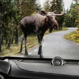 Как нужно тормозить по правилам дорожного движения