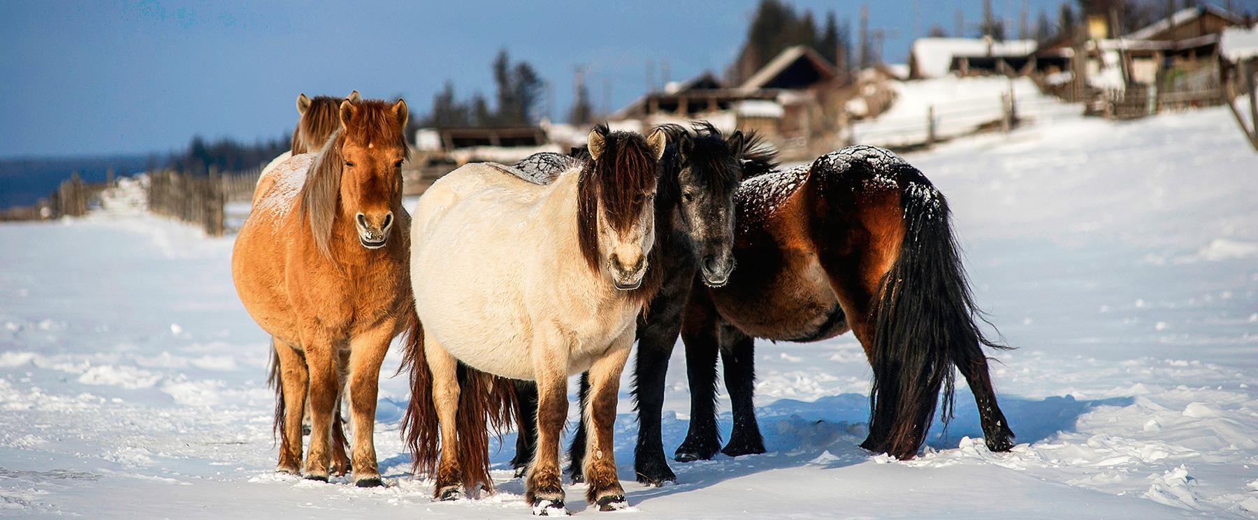 Кони пони